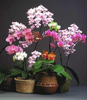 orchidee i storczyki
